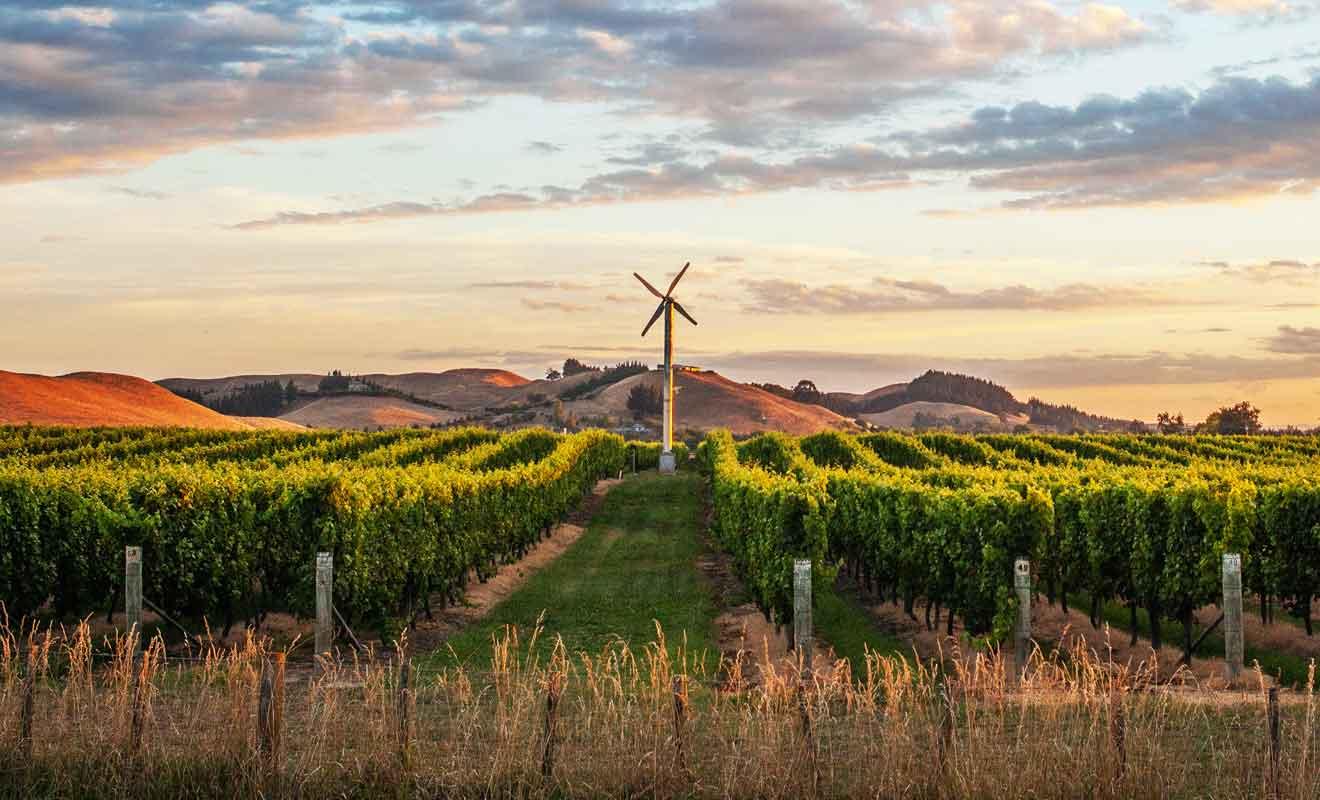 La qualité des vignobles devrait vous motiver, surtout si vous souhaitez rapporter des bouteilles de vin.