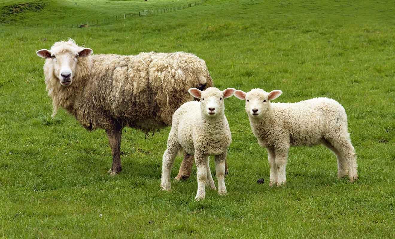 À l'origine, le lieu de tournage est occupé par une simple ferme qui pratique l'élevage de moutons.