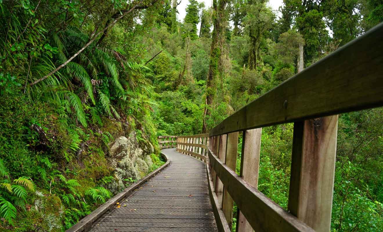 Les bénévoles du Département de la Conservation font un travail extraordinaire pour construire des sentiers en forêt.