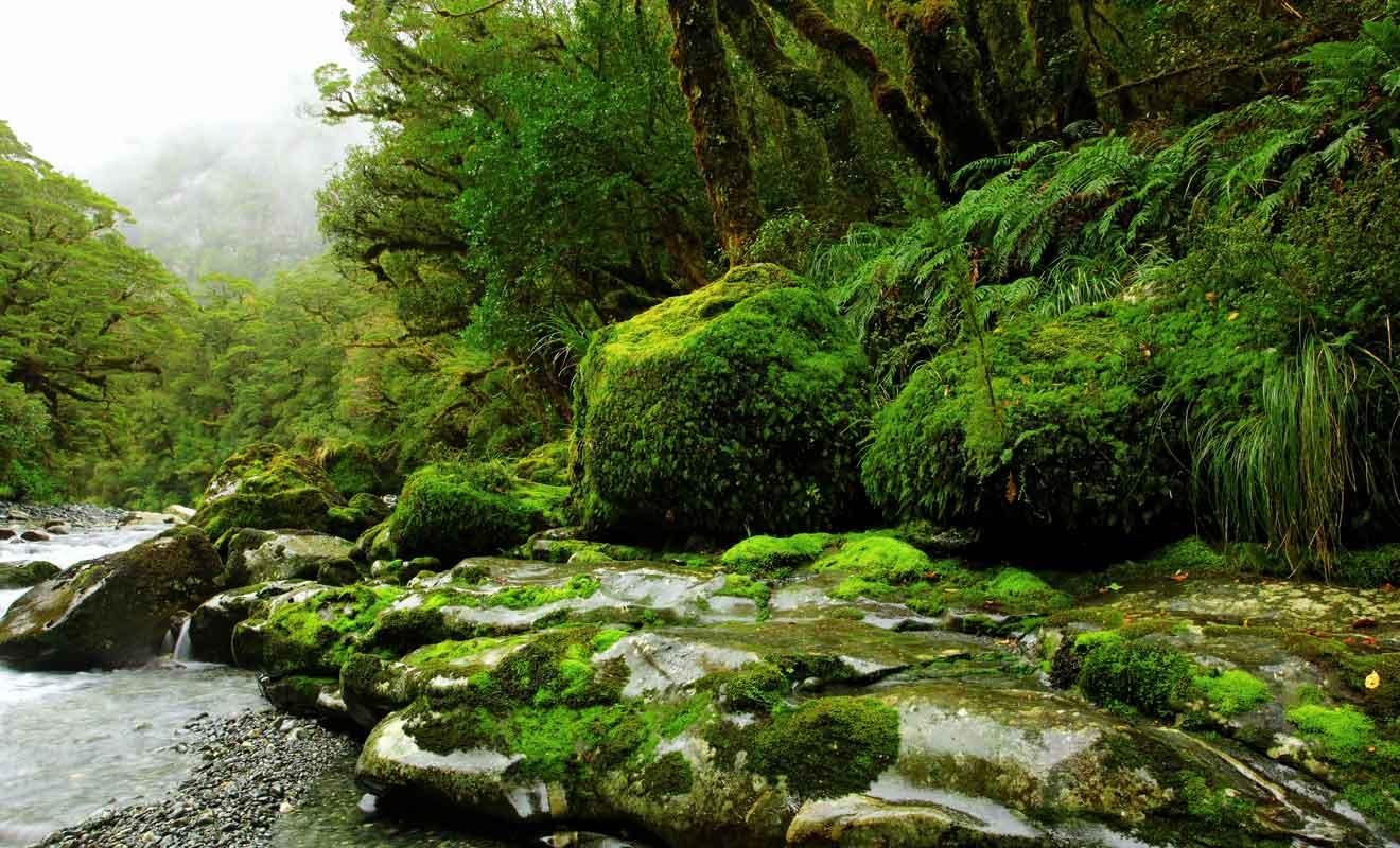Les Maoris venaient chercher le jade dans les rivières de la West Coast.
