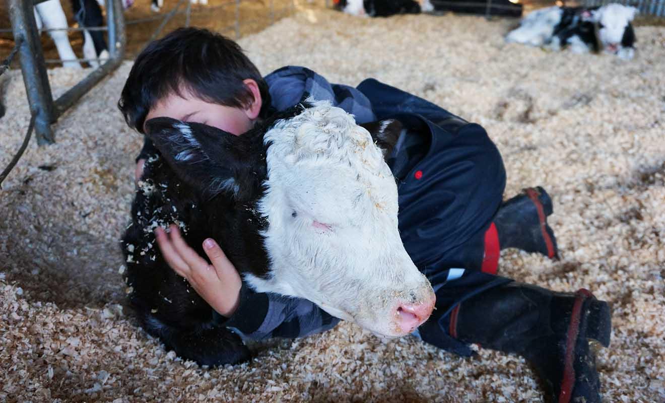 Pour travailler à la ferme, il ne faut pas avoir peur de s'occuper des animaux au quotidien.