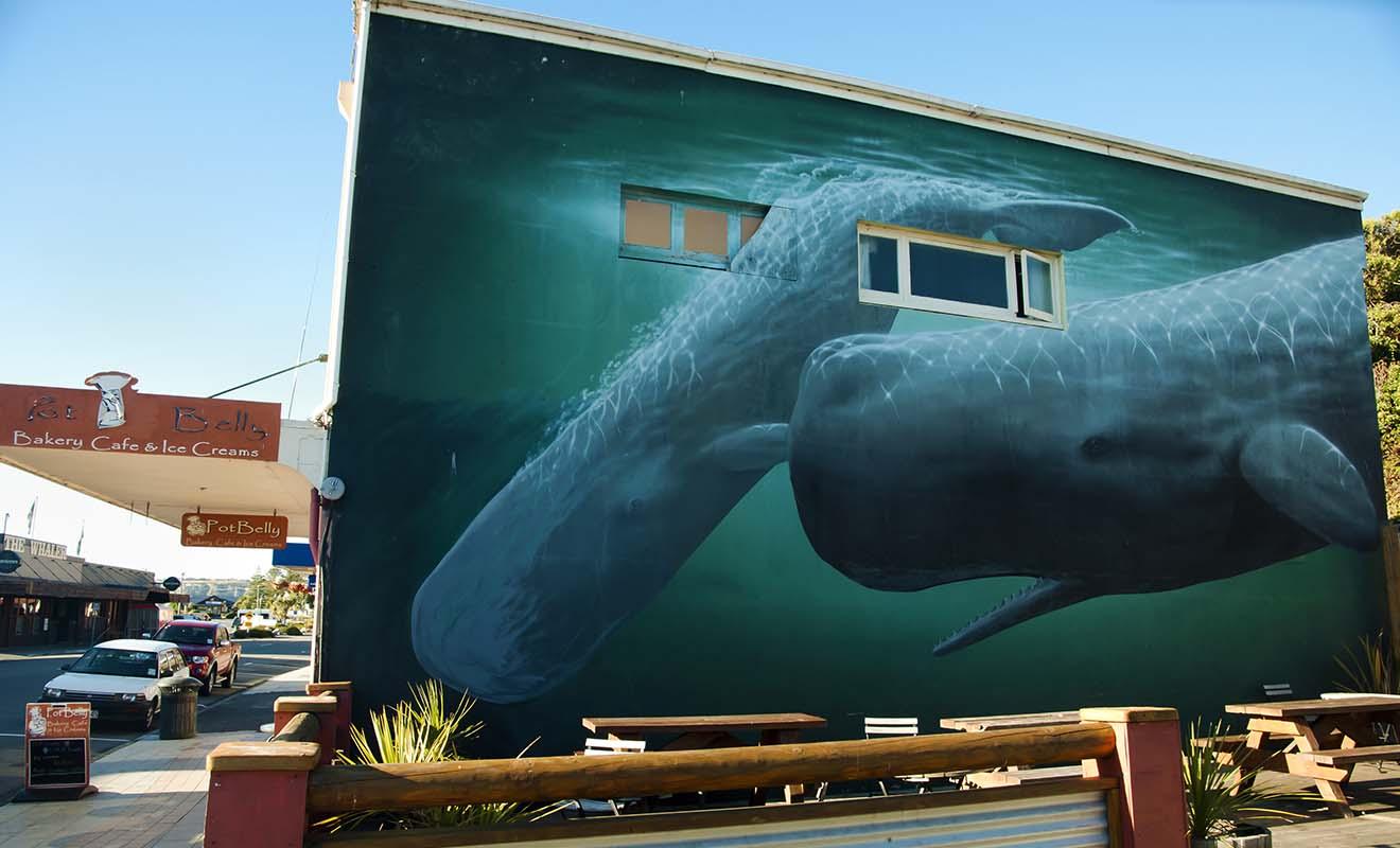 Les baleines sont présente toute l'année dans la péninsule de Kaikoura, car il existe un gigantesque canyon sous-marin ou les baleines viennent se nourrir.