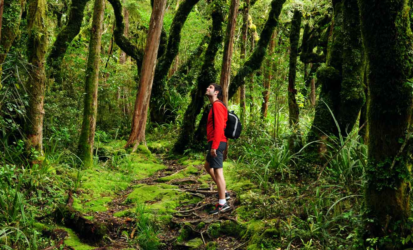 La forêt des goblins possède une atmosphère envoutante.