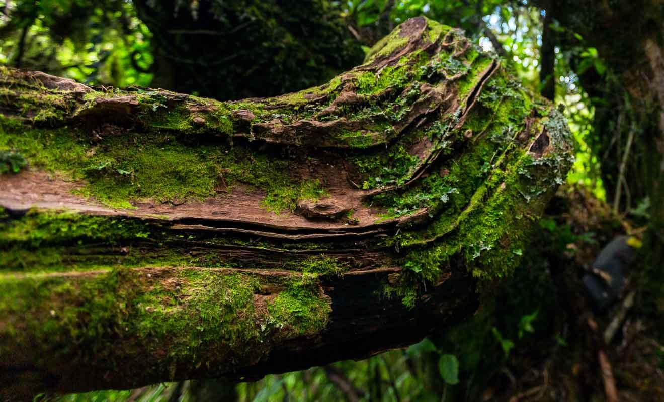 La forêt des Goblins ressemble beaucoup à celle du Fiordland.