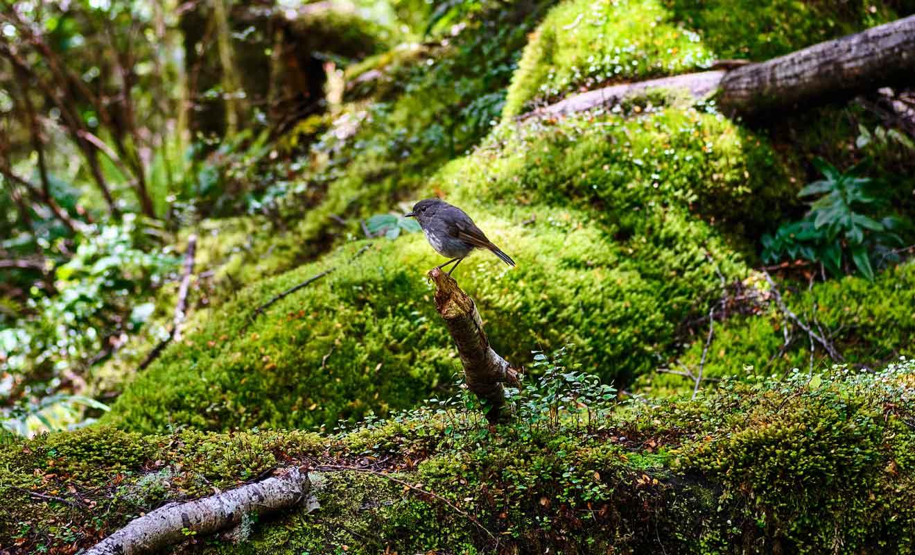 La faune qui peuple le Fiordland est d'une prodigieuse diversité.