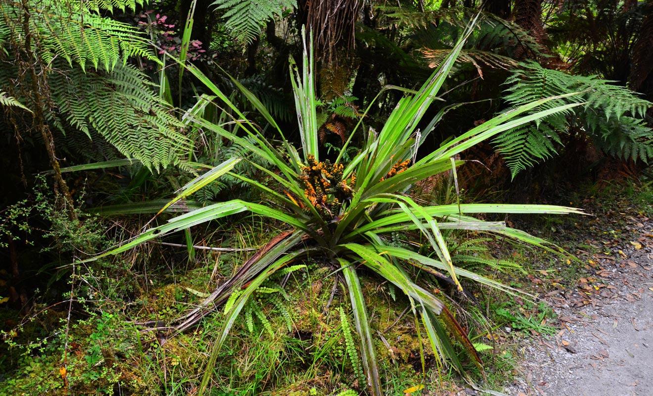 La pluviométrie record de la région est à l'origine d'une végétation luxuriante.