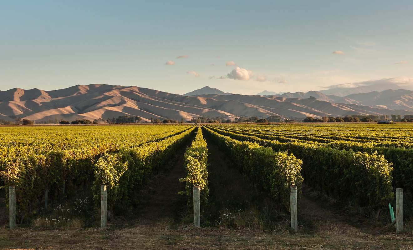 Au risque de vous surprendre, le Sauvignon blanc du Marlborough est désormais reconnu comme l'un des meilleurs du monde.