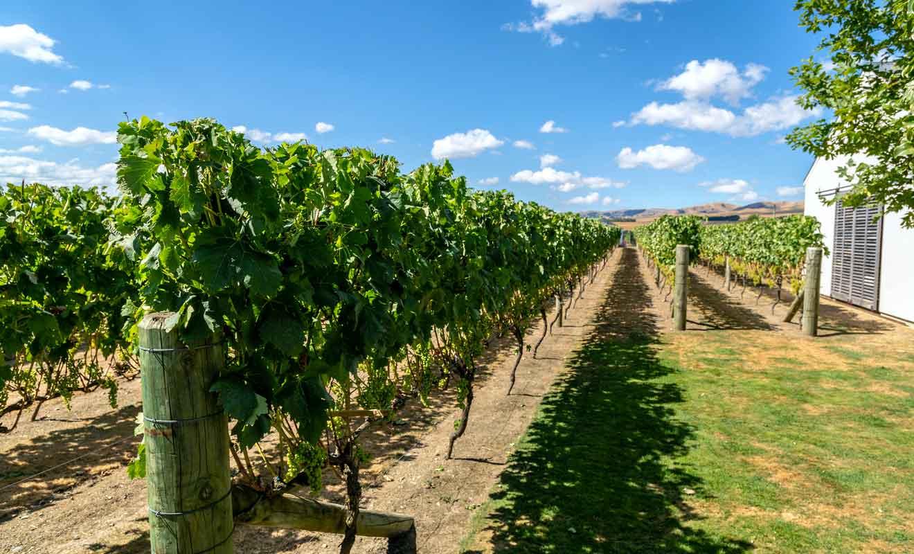 Ce sont les vignobles qui ont fait le succès de ce petit village.