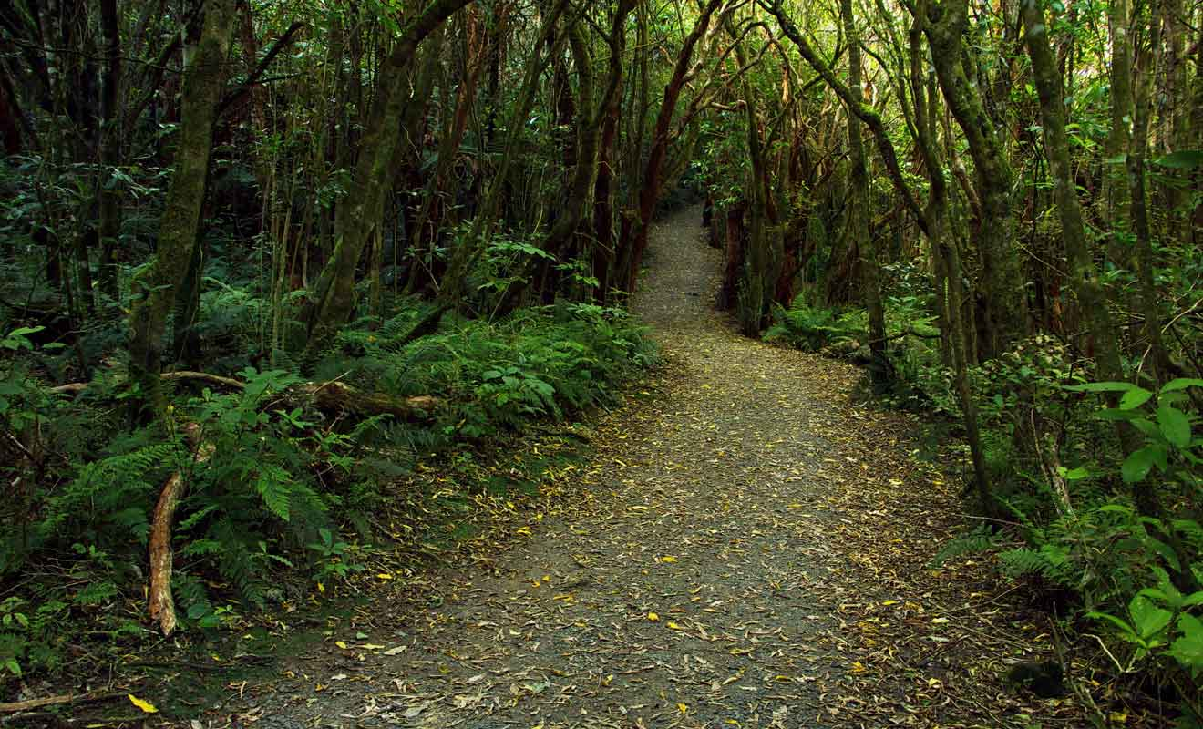 Comptez un quart d'heure de marche pour rejoindre les Matai Falls.