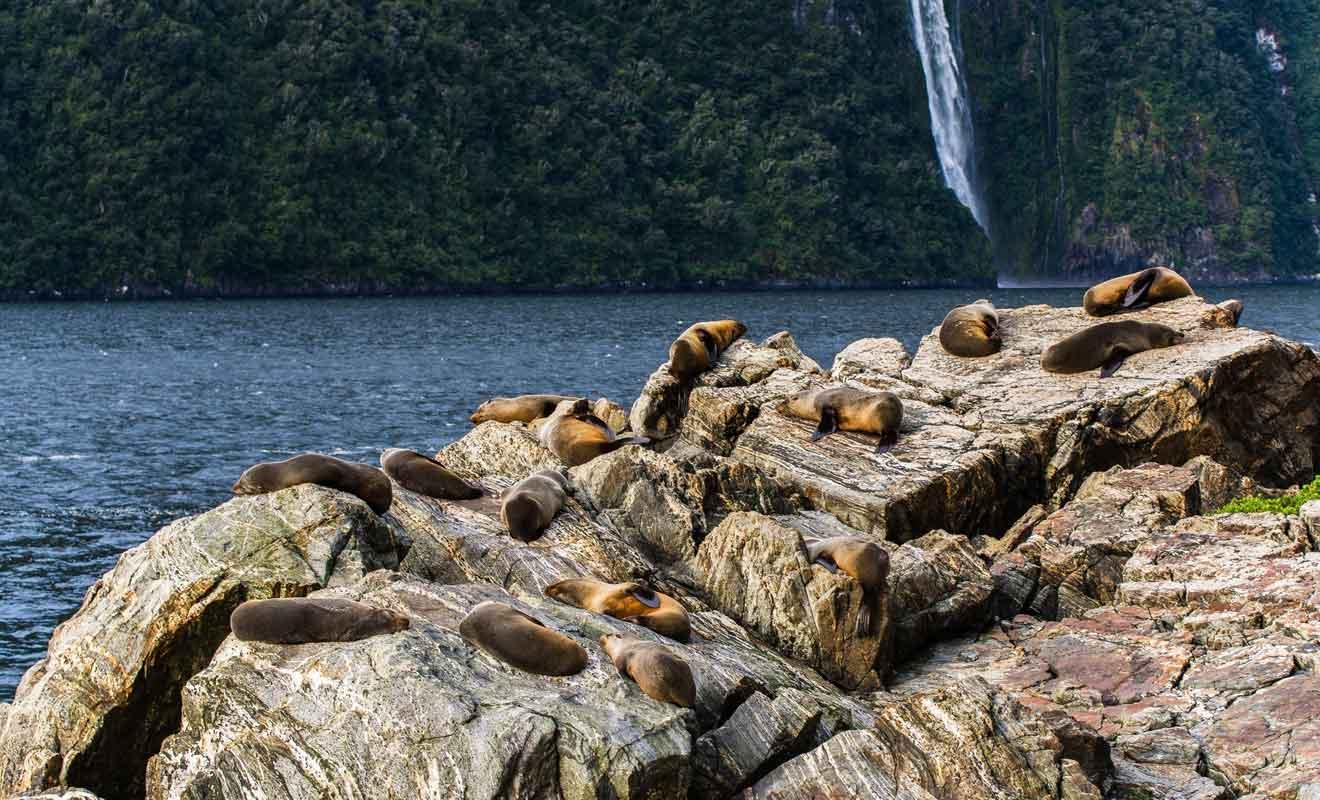 Pensez à emporter des jumelles pour admirer les otaries sur le Seal Rock.