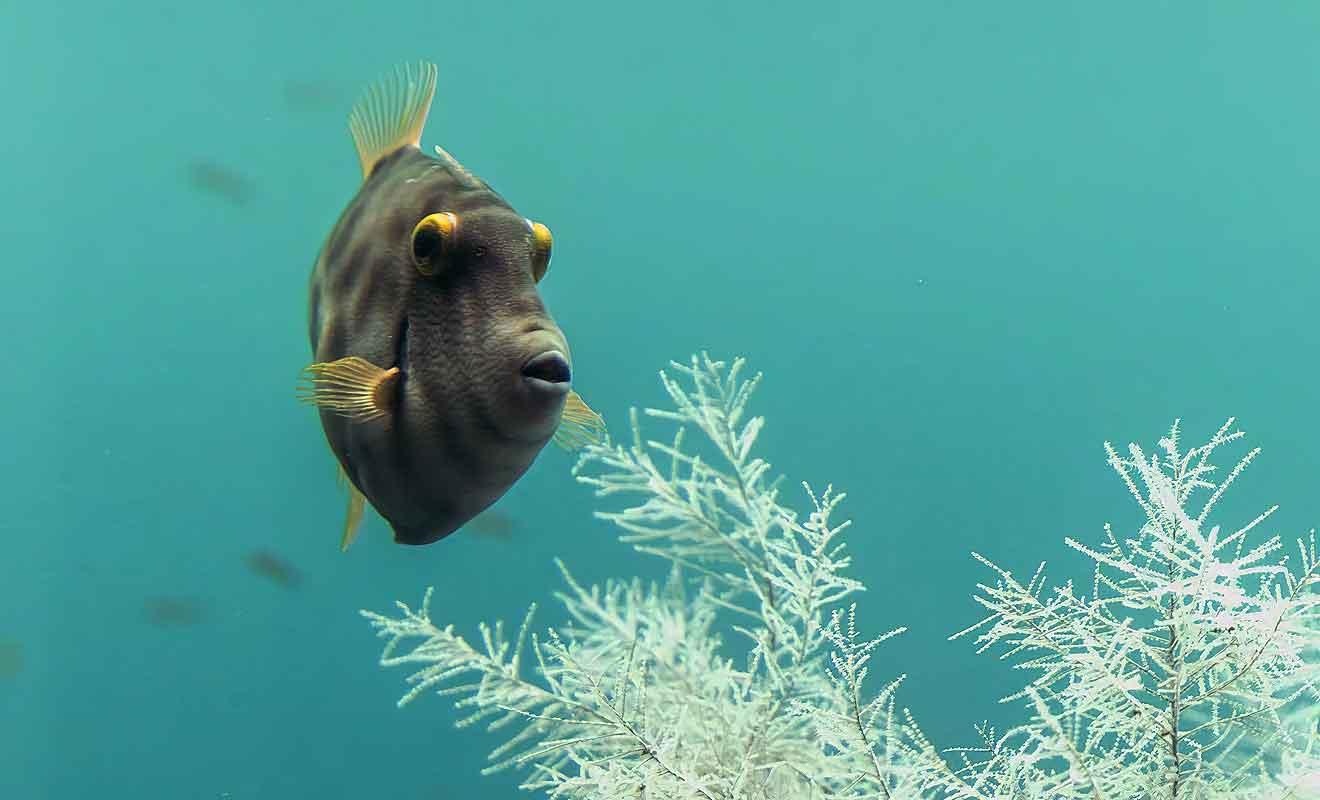 La superposition d'eau douce et de mer recrée les conditions des grandes profondeurs.