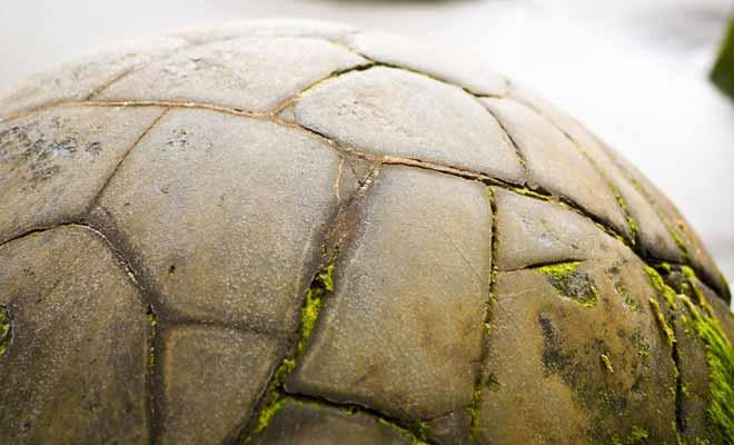 Certains boulders ressemblent à des ballons de football ou à un oeuf prêt à éclore...