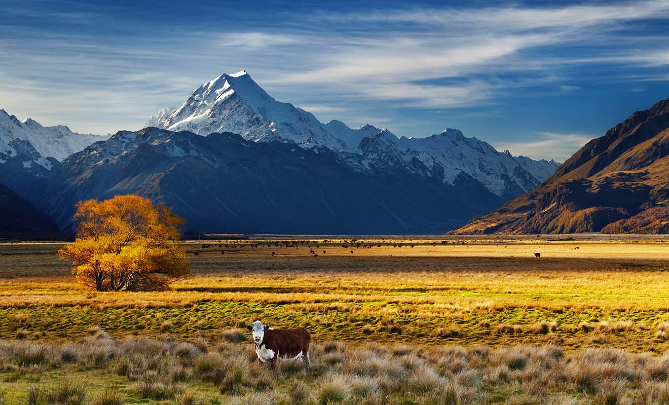 On s'installe en Nouvelle-Zélande pour y travailler, et pas seulement pour ses paysages.