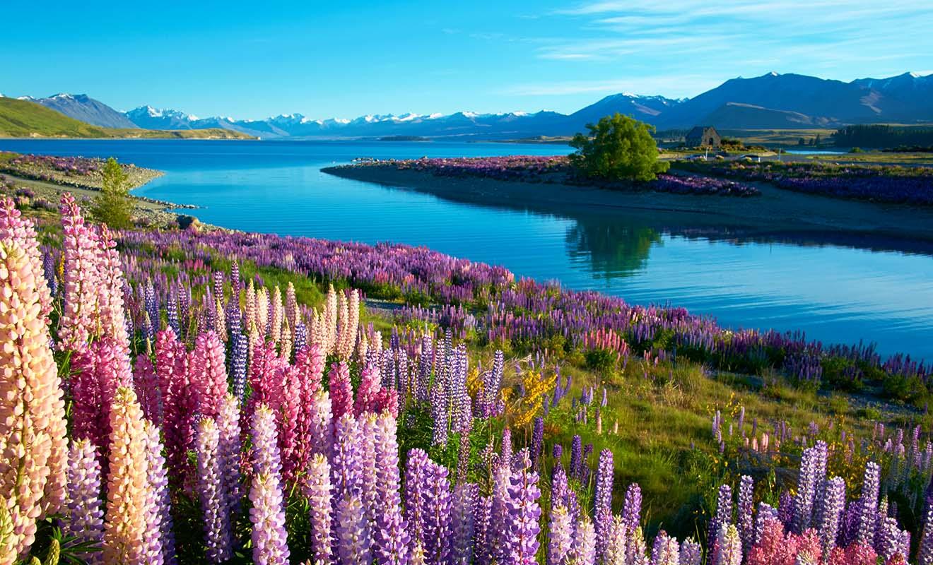 C'est en partie à cause des tremblements de terre, que la Nouvelle-Zélande est un pays aussi beau pour avoir été sculpté pas les forces de la Terre durant des millions d'années.