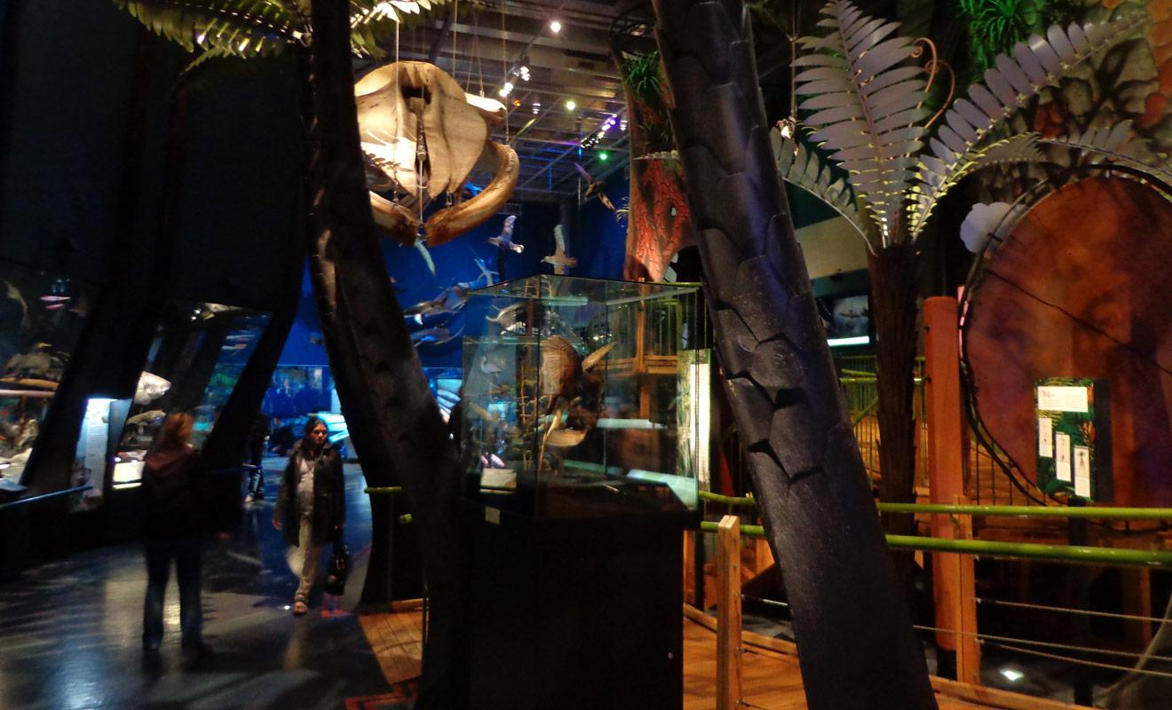 Le Te Papa possède plusieurs étages et chacun d'entre eux couvre un thème particulier en rapport avec l'Histoire de la Nouvelle-Zélande. Des expositions temporaires sont également organisées autour de sujets très variés.