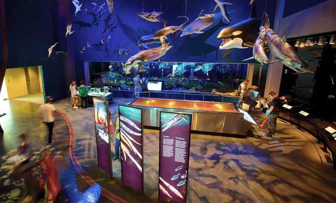 Le musée Te Papa est un musée gratuit qui se trouve en plein centre-ville de Wellington, sur les quais.