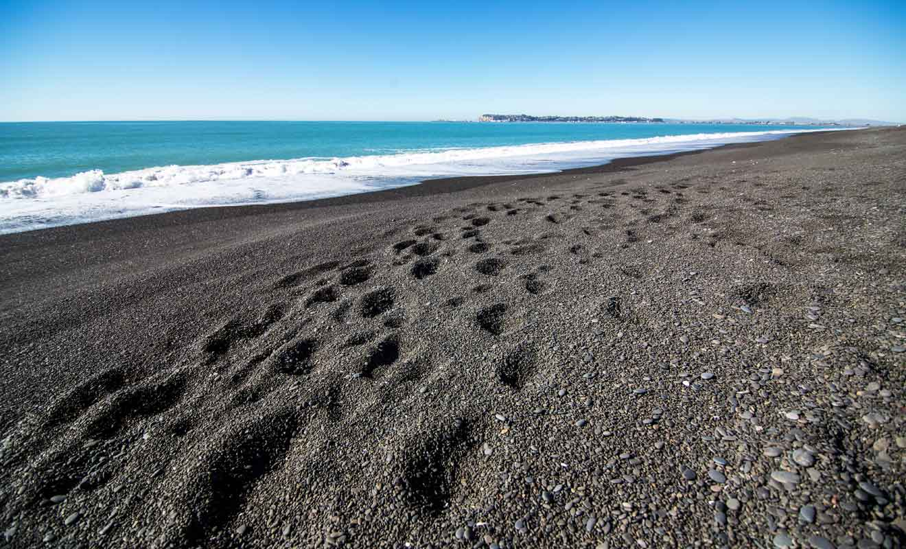 On peut se baigner à certains emplacements de la plage de Marine Parade.