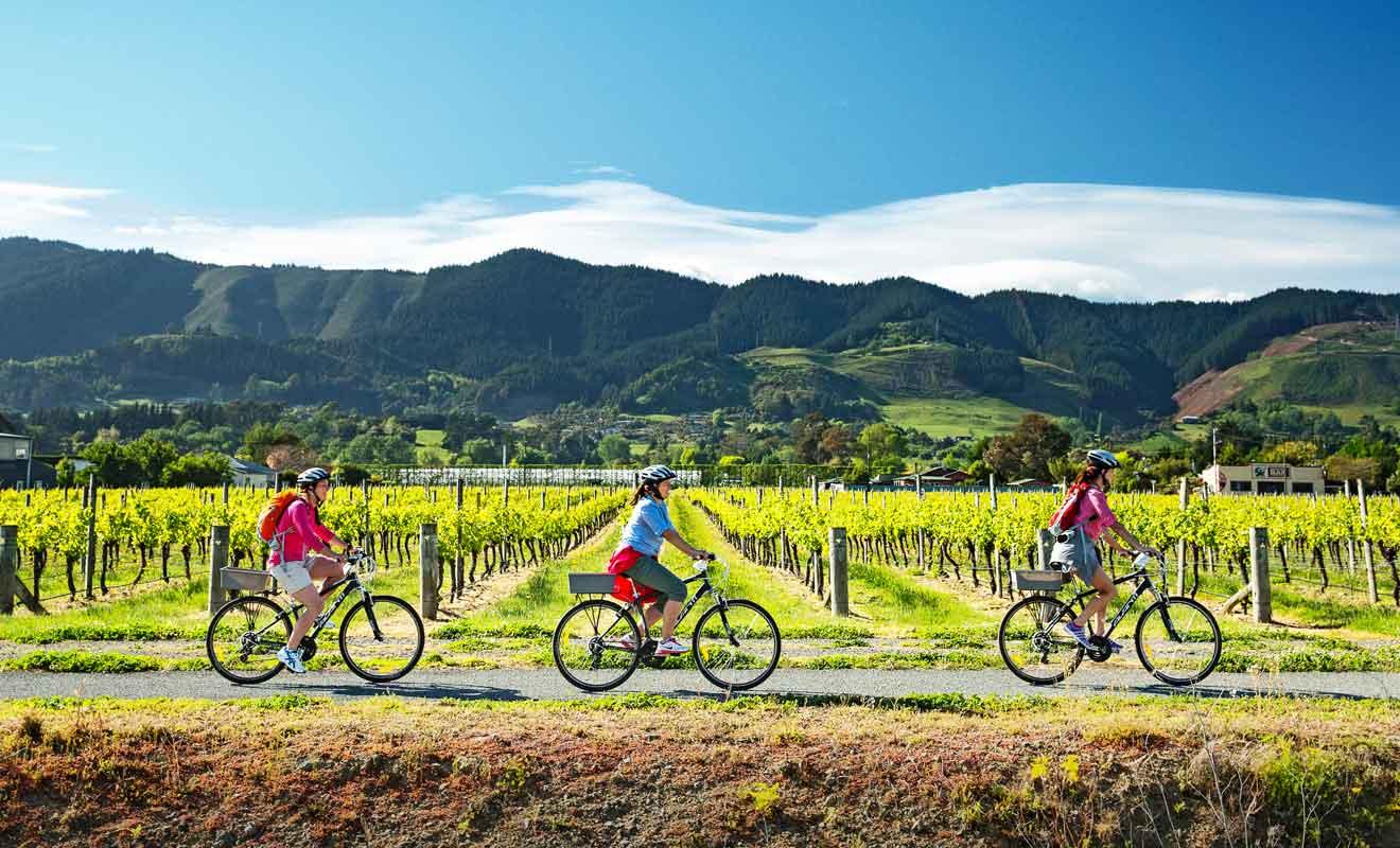 Nelson ne peut rivaliser avec le Marlborough mais possède tout de même de très beaux vignobles.