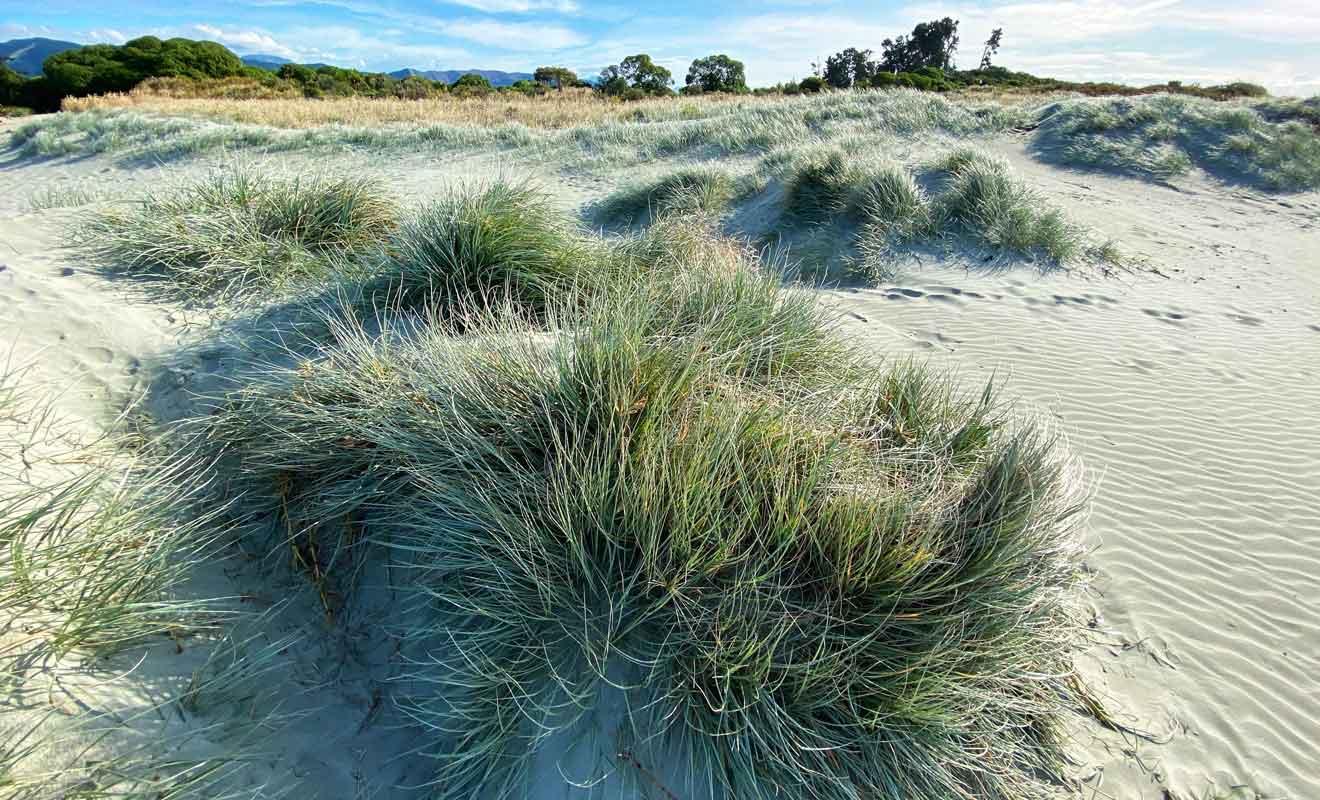 Tahuna beach possède quelques restaurants et des hébergement derrière les dunes, mais il n'y a pas de front de mer à proprement parler.