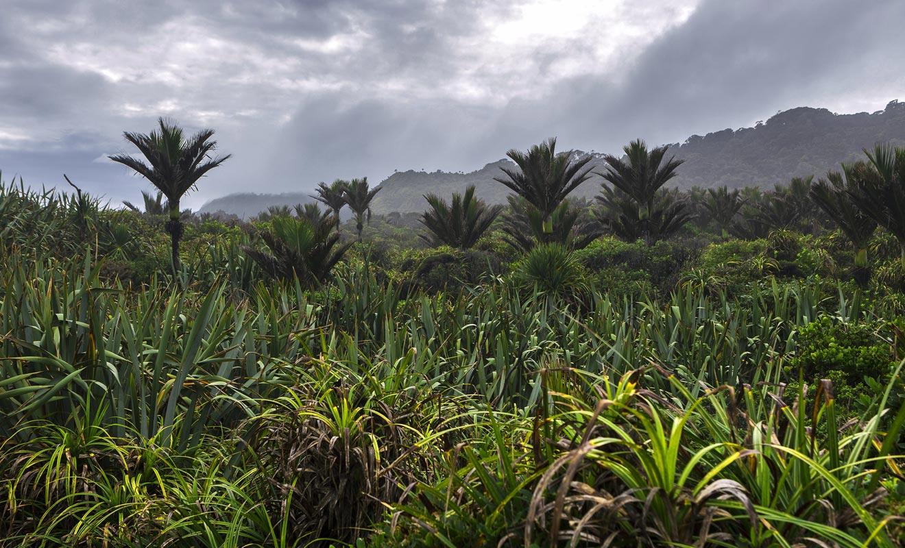 Les microclimats de Nouvelle-Zélande permettent à des palmiers de pousser très au sud.
