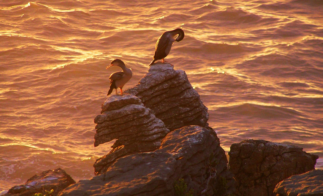 Cette photo illustre bien la nature des Pancake Rocks. Chaque couche de roche représente un intervalle d'un million d'années ! Cela donne le vertige, mais les oiseaux s'en moquent éperdument.
