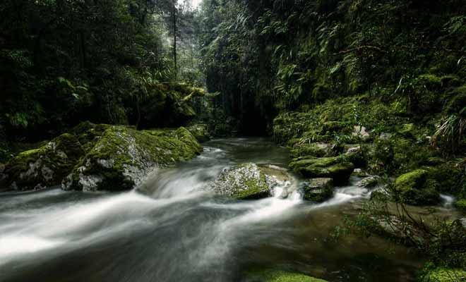 Le parc national de Paparoa peut se visiter sans guide. Il faut cependant demander des cartes récentes au centre d'information, car le tracé des sentiers est souvent modifié.
