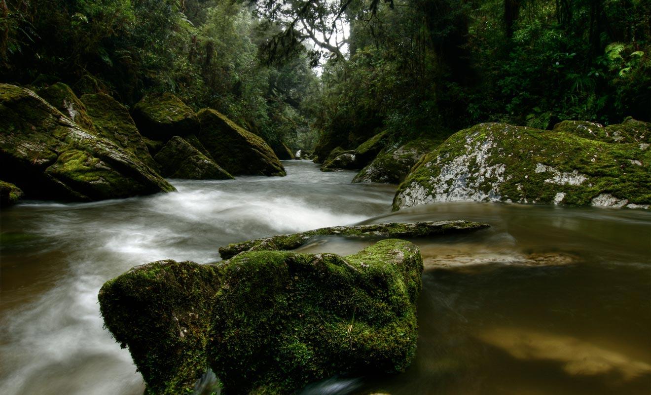 Parce qu'elles sont souvent impénétrables et humides, les forêts du Fiordland sont totalement sauvages.