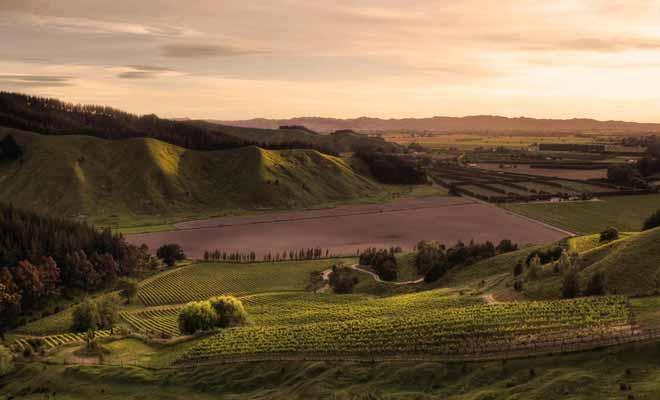 La région de Gisborne n'est pas la plus touristique du pays, mais elle possède d'excellents vignobles qui peuvent justifier un détour durant votre séjour.