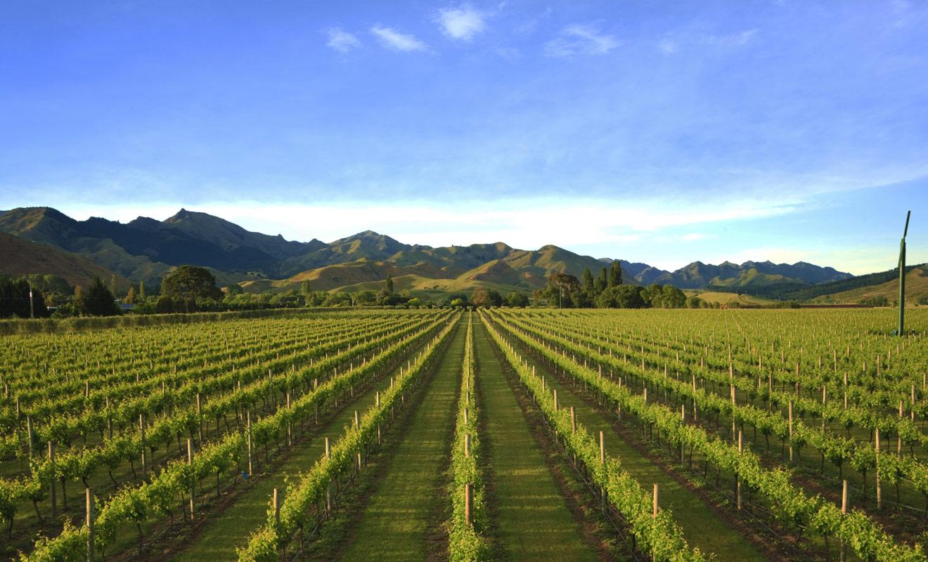 Les vignobles de Nelson se trouvent entre le parc national d'Abel Tasman et une l'autre grande région viticole de l'île du Sud : le Marlborough. Si l'on devait départager ces deux régions, le Nelson perdrait le match, mais cela ne signifie pas que sa production soit mauvaise... au contraire, elle est excellente.