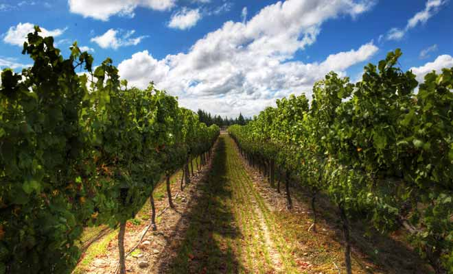 La production de Wairarapa est l'une des plus petites du pays, mais sa qualité est excellente et mérite que vous preniez le temps de tester deux ou trois vins dans une cave de la région.