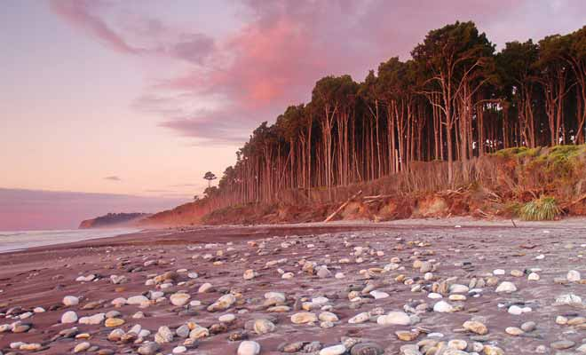 Les plages de la West Coast sont désertes et jonchées de galets. La force du courant et les débris qui jonchent la plage ne sont pas parfaits pour se baigner.