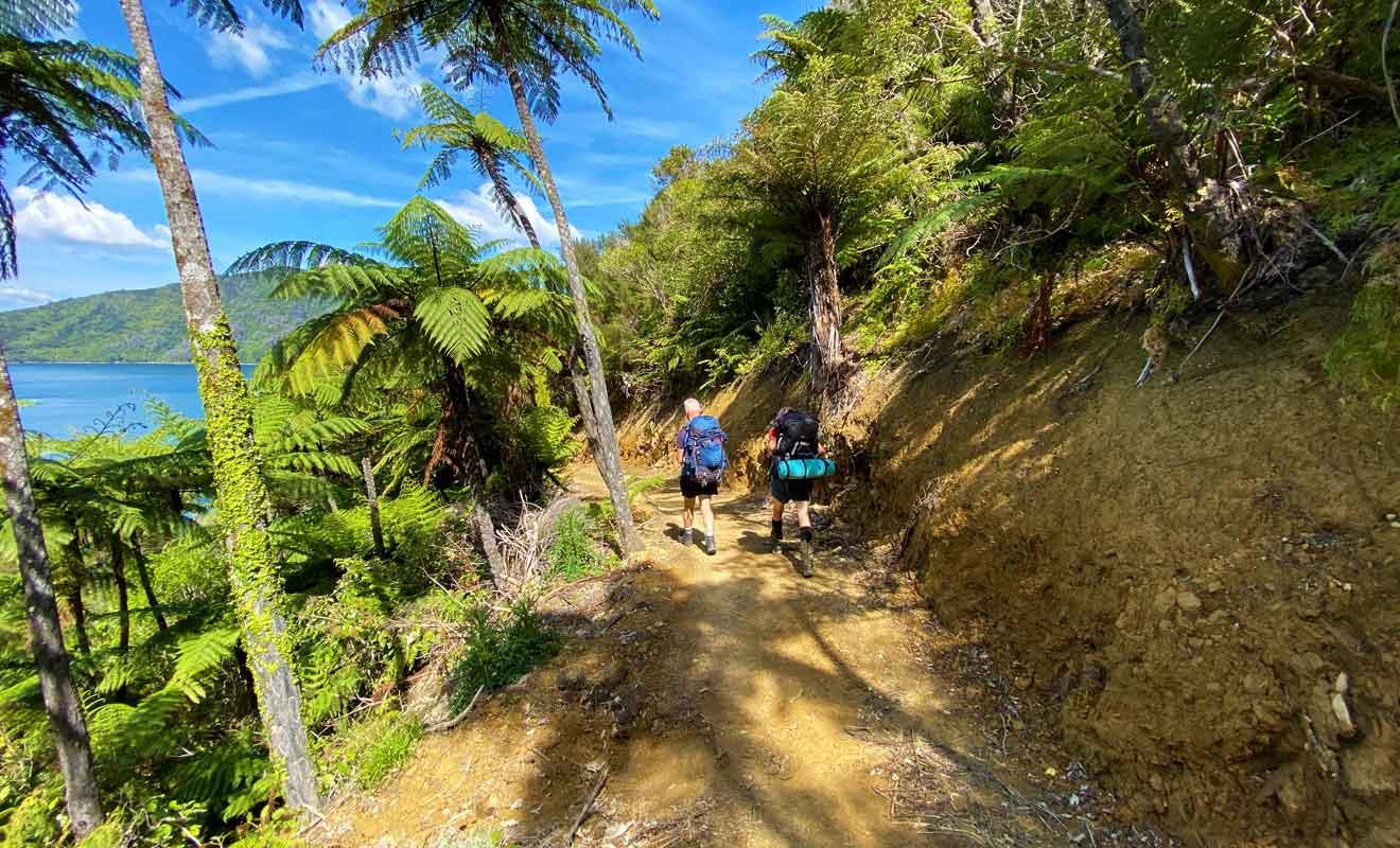 Le climat subtropical des Marlborough Sounds favorise une végétation dense où se mêlent rimus et palmiers nikaus.