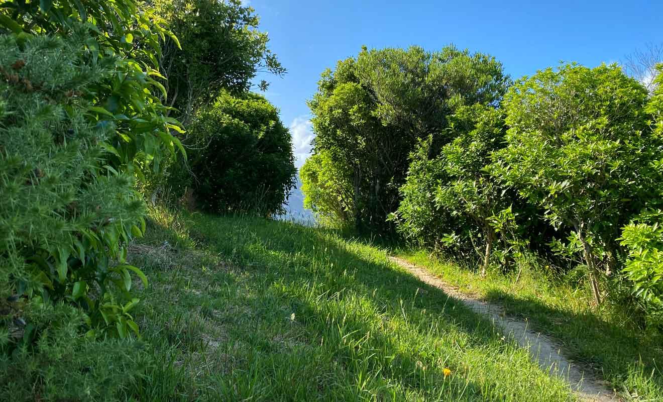 S'il est possible d'apercevoir un peu le paysage entre les arbres durant la montée, seul le sommet offre une vue véritablement dégagée sur la région.