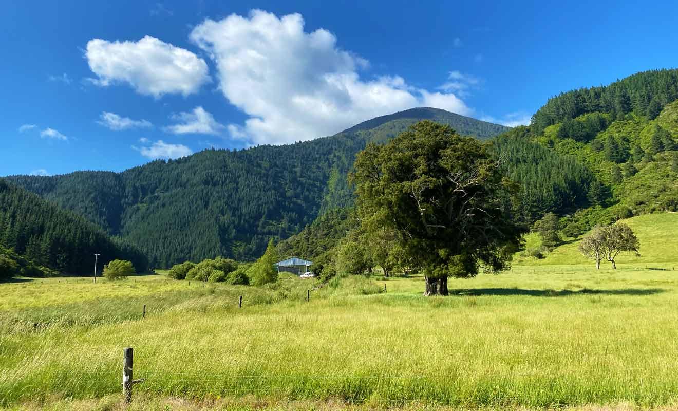 La route qui mène à Robin Hood Bay passe par Whatamango Bay et ses paysages bucoliques.