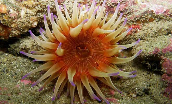La riche vie aquatique et la beauté des paysages sous-marins sont les deux principales raisons qui devraient vous pousser à pratiquer la plongée sous-marine en Nouvelle-Zélande.