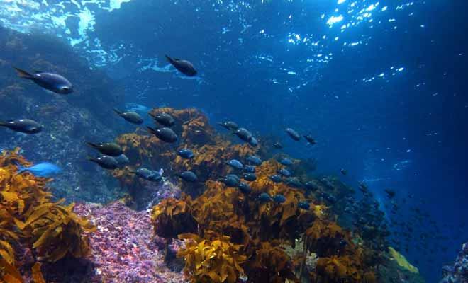La plongée sous-marine ne présente pas de risque en Nouvelle-Zélande du moment que vous suivez les consignes de sécurité à la lettre. Les baptêmes de plongée sont de toute façon très bien encadrés.
