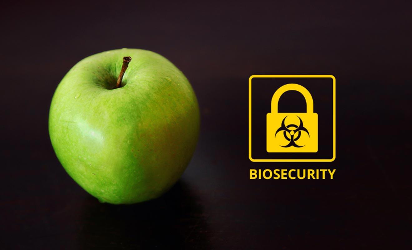 Une simple pomme oubliée dans un sac et les services de la biosécurité de l'aéroport vous octroieront une amende de 400 dollars !