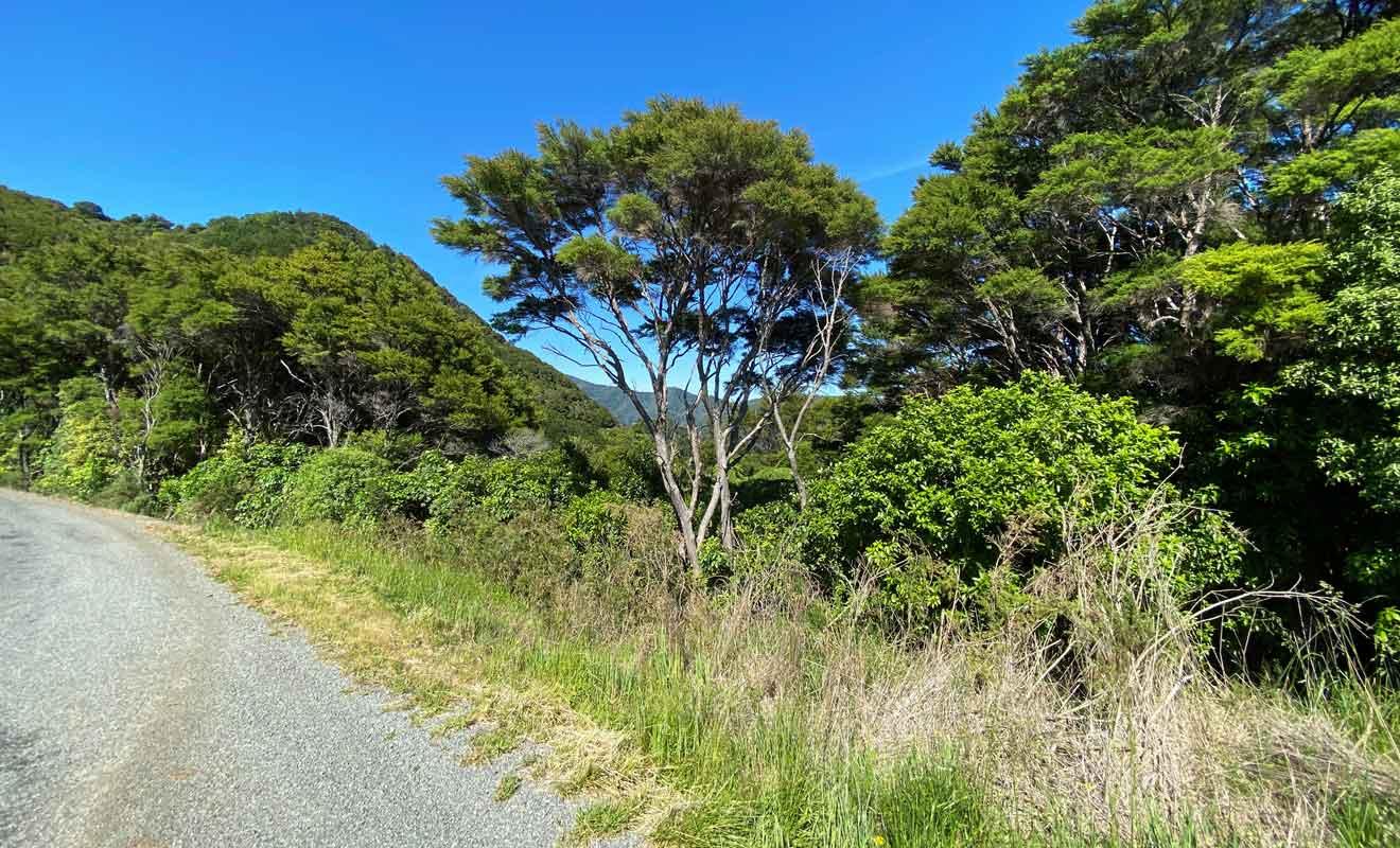 La plupart des voyageurs poursuivent leur route vers Abel Tasman ou Picton sans connaître l'existence de French Pass.