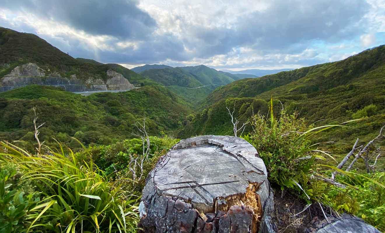 Plusieurs chaines de montagne obligent les visiteurs à parcourir 150 km au lieu de 50 pour rejoindre Cape Palliser.