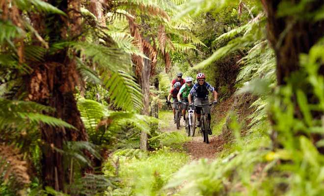 La forêt de Redwoods est dédiée en grande partie aux promenades en vélo, avec des pistes qui sont réservées aux cyclistes.