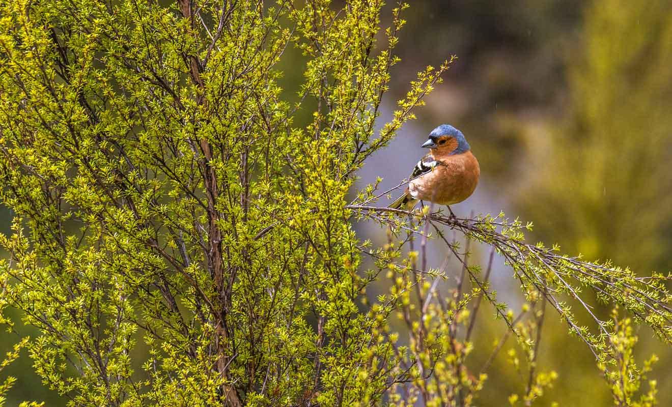Pour identifier aisément les espèces d'oiseaux, visitez préalablement le i-Site de Saint Arnaud.