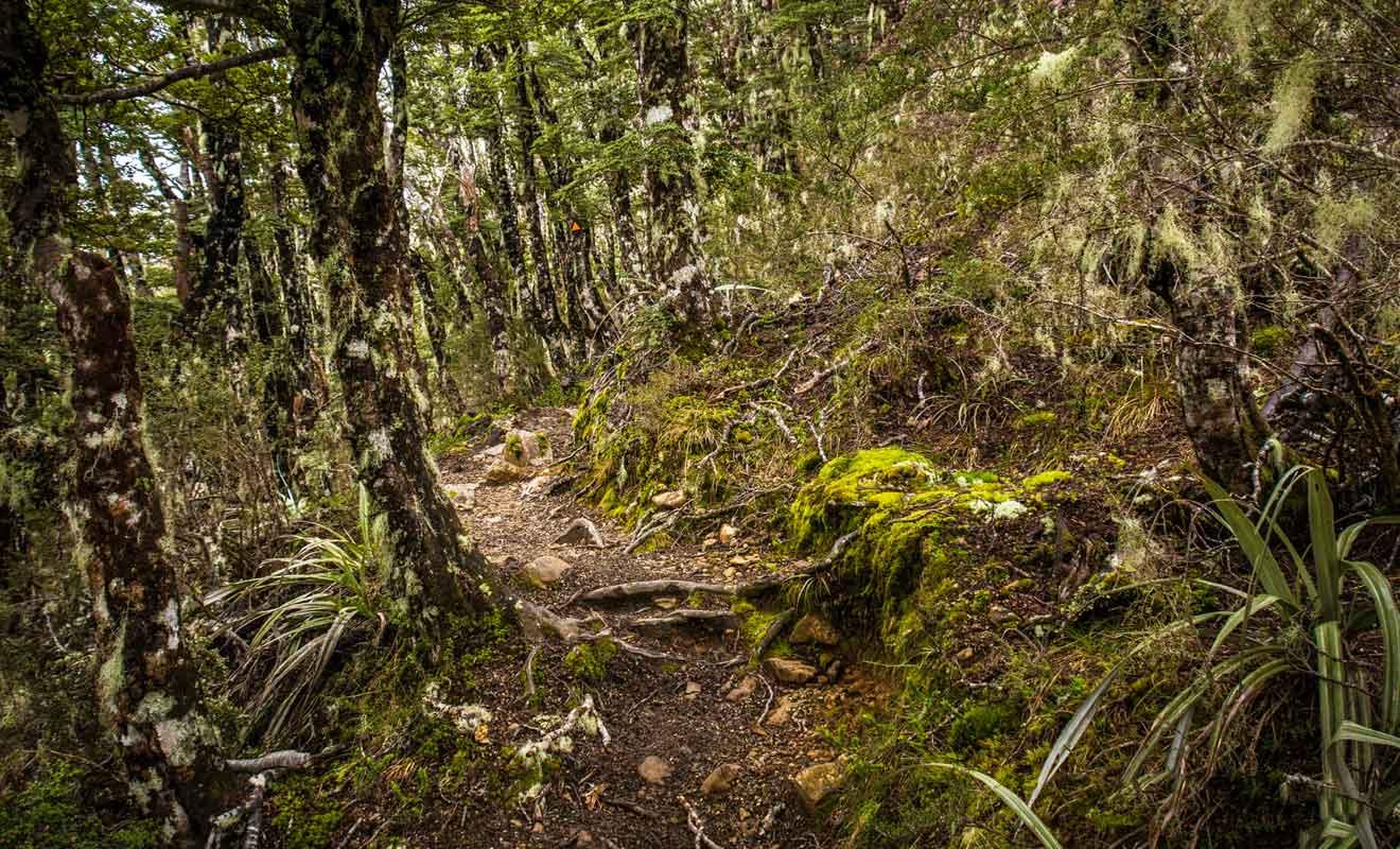 Le chemin peut être délicat à parcourir avec beaucoup de boue s'il a plu les jours précédents.