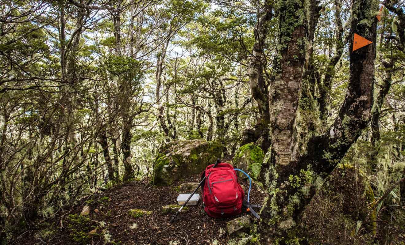 Cette phase d'ascension traverse une forêt de hêtres moussus.
