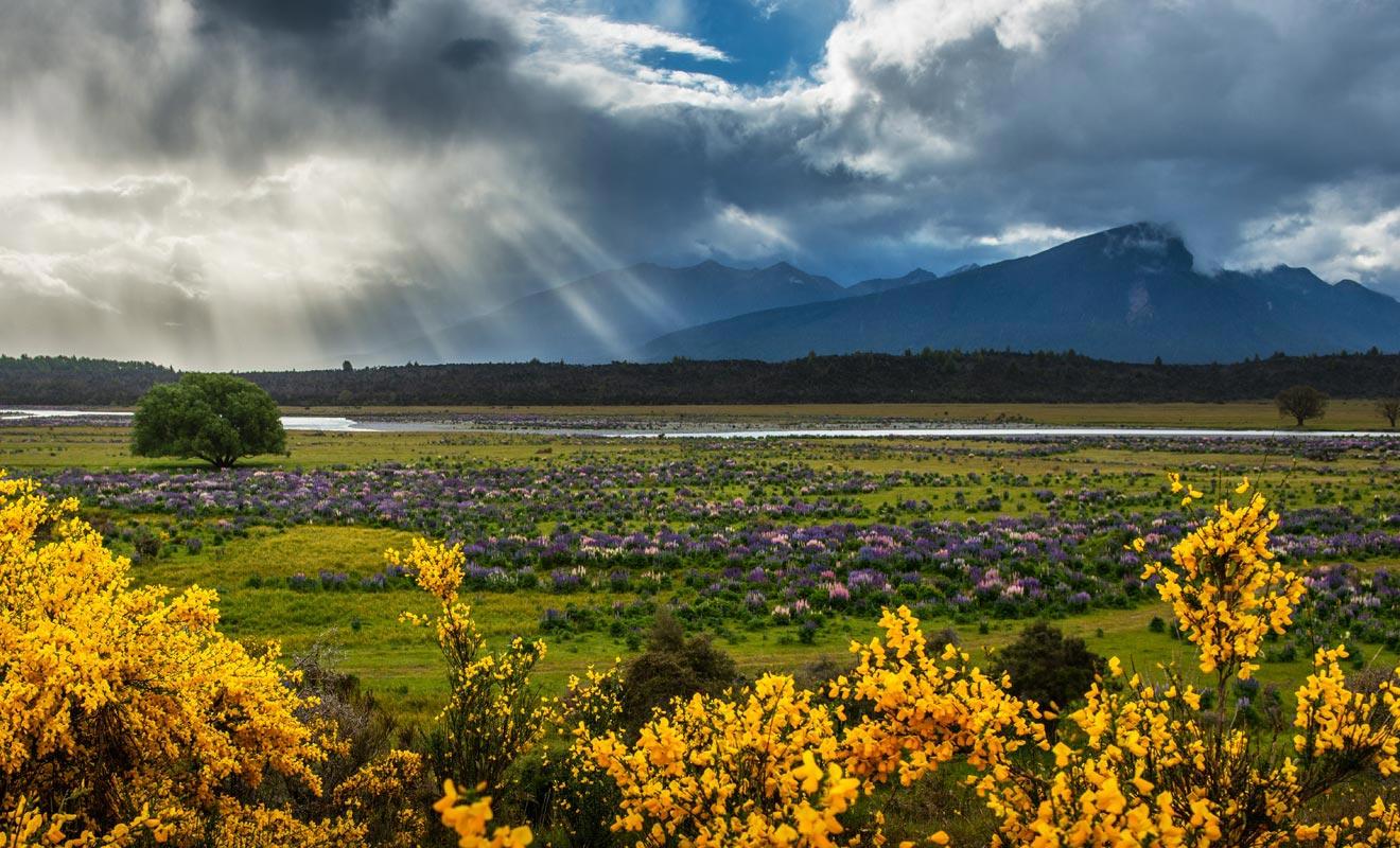 Venez admirer la beauté des paysages de Nouvelle-Zélande.