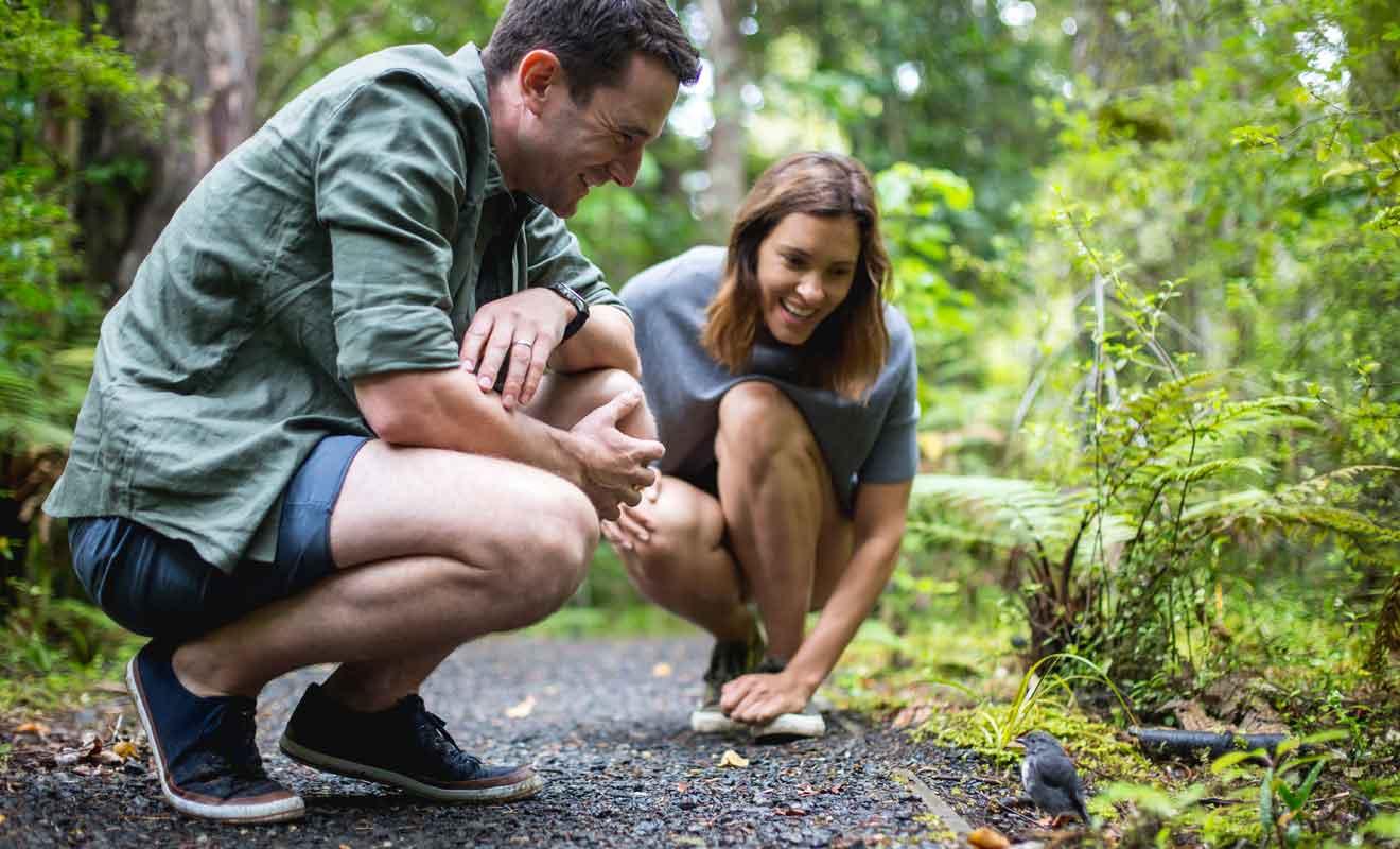 Ce petit oiseau charmant se rencontre aussi sur la piste de Routeburn Track sur l'île du Sud.
