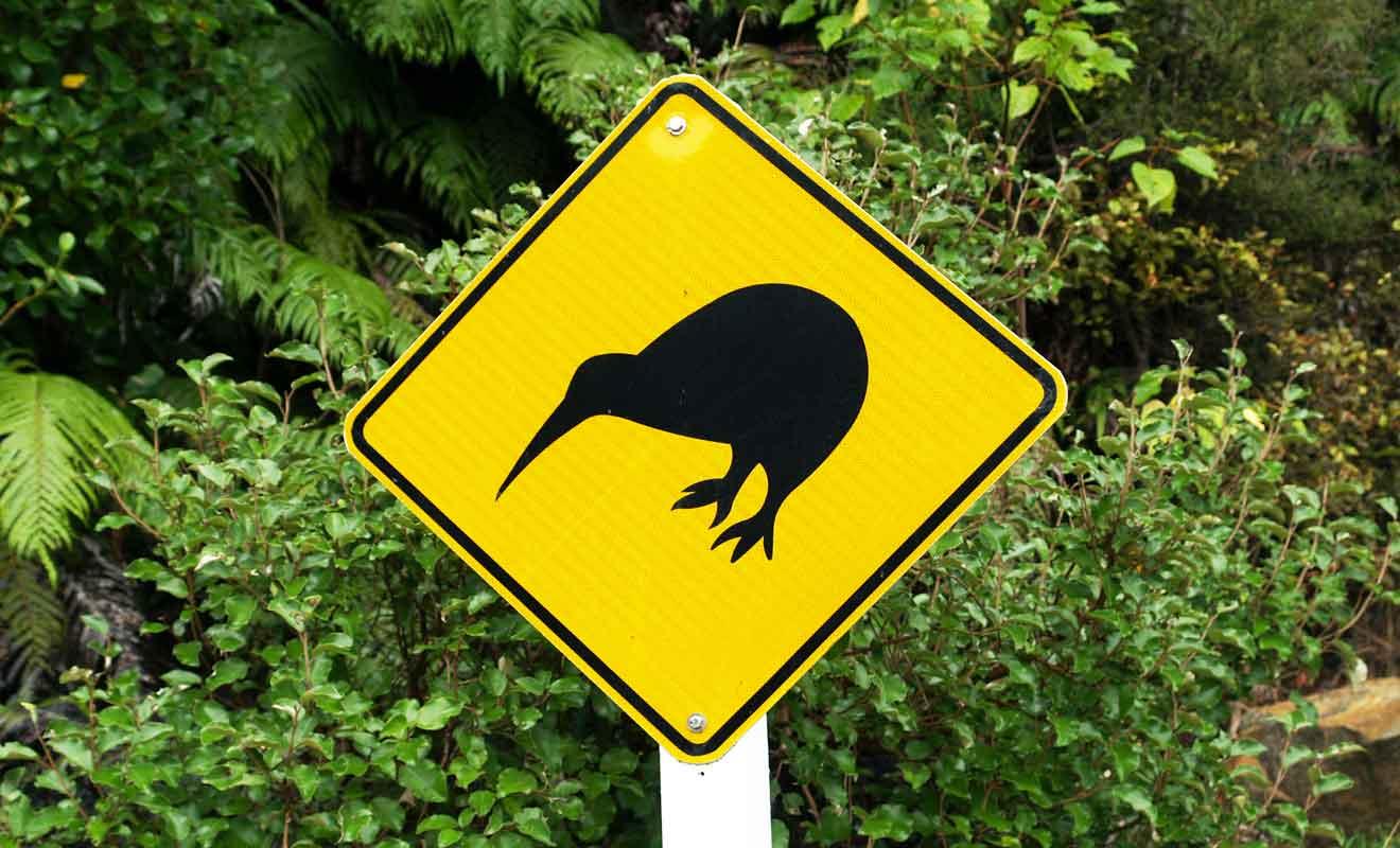 Même si le kiwi se porte bien sur cette île, l'espèce reste menacée à l'échelle de la Nouvelle-Zélande.