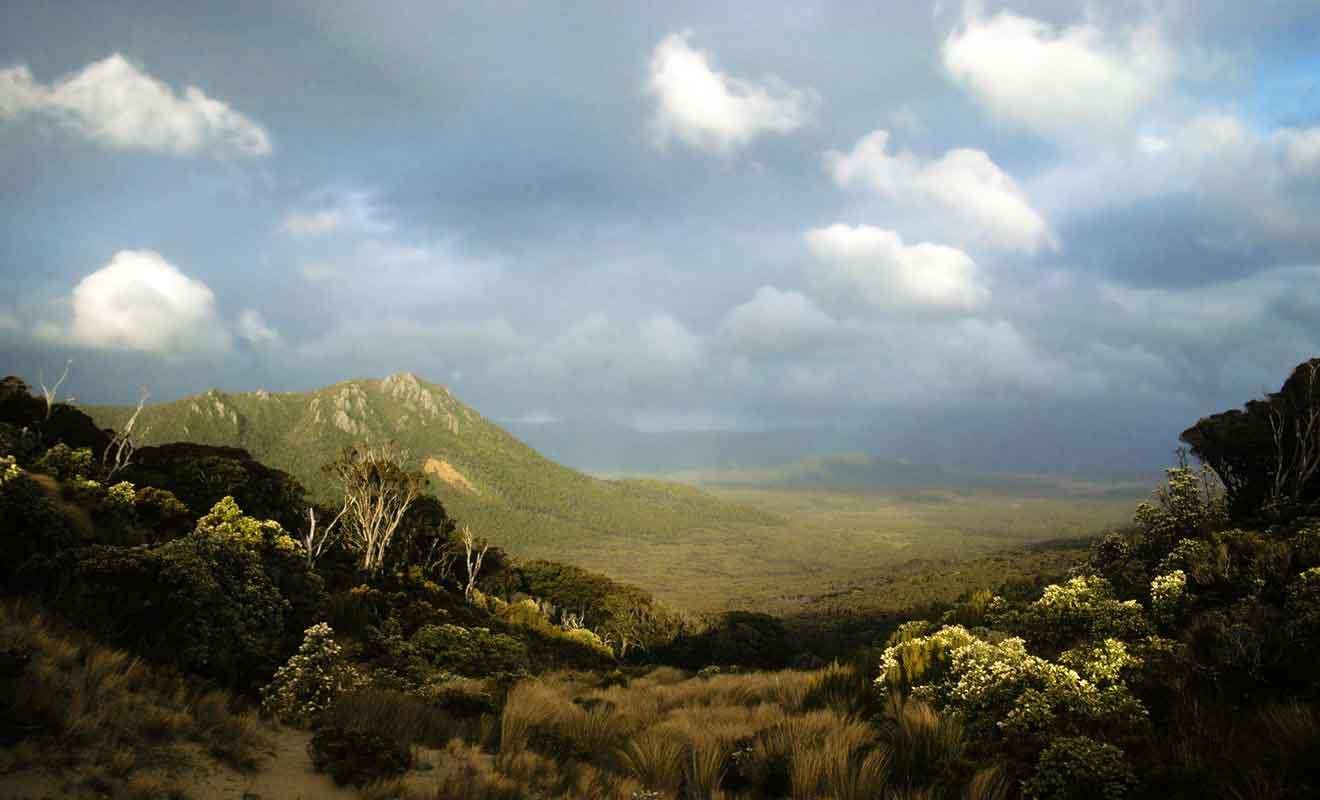 La Rakiura Track alterne les passages en forêt ou en plaine.