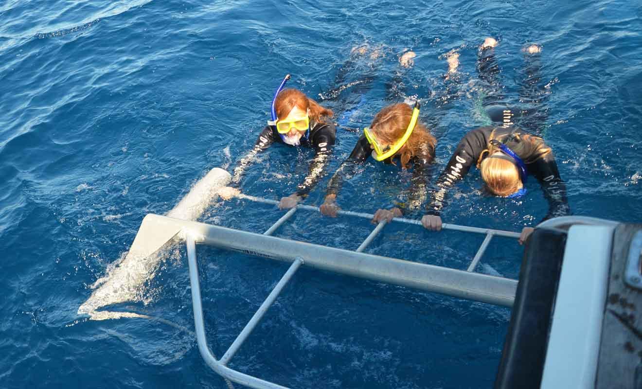Revêtus d'une combinaison, les nageurs sont tirés par un navire à faible allure pour admirer facilement les dauphins.