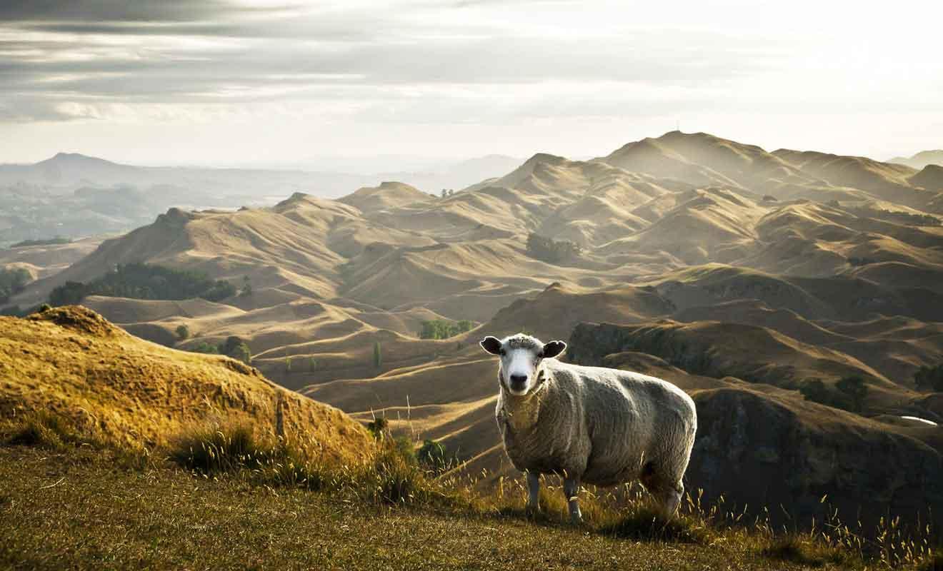 Dans ma mesure où l'on peut même rejoindre le sommet par la route, vous n'avez aucune raison de ne pas faire un détour dans les collines de Te Mata.