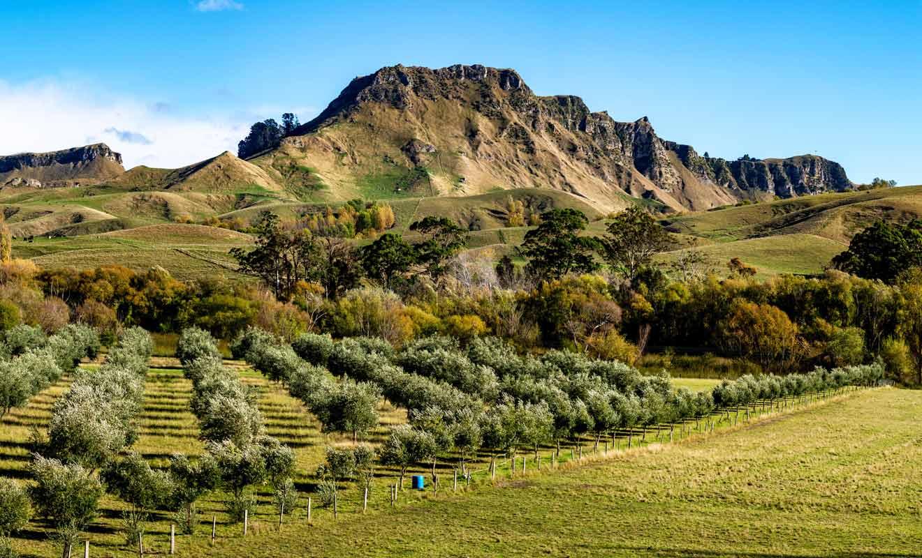 Dans la légende maorie, les collines représentent le corps de Te Mata.